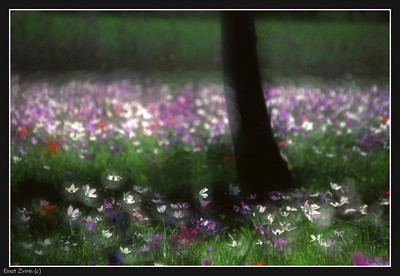 Participated in the   Four Seasons: Spring Exhibition  More Impressionistic Photography,  here