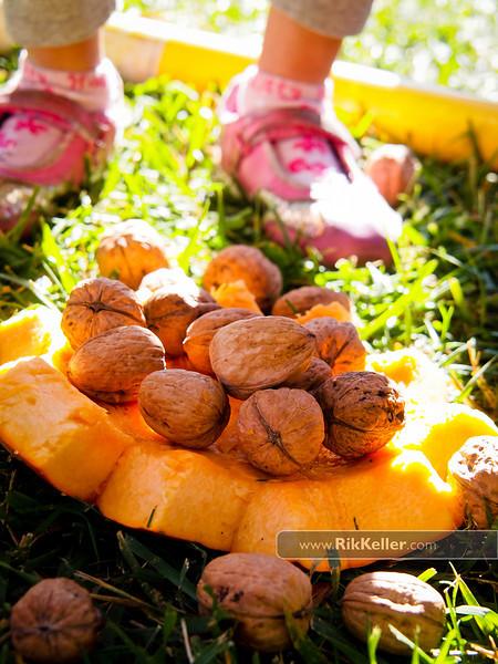 Walnut Toss<br /> Kindergarten Fiesta del Otoño