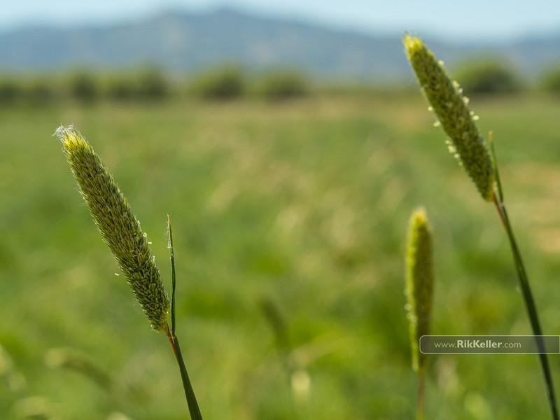 California Native Grasslands Association (CNGA) Field Day at Hedgerow Farms