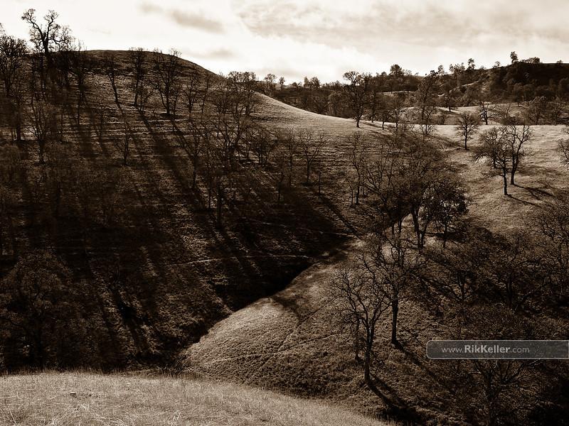 Bobcat Ranch. Yolo County, CA - January 2011