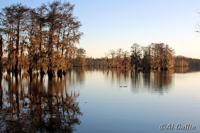 "©Al Gallia; ""Evening Peace""; Lake Martin in Cypress Island Preserve, Louisiana."
