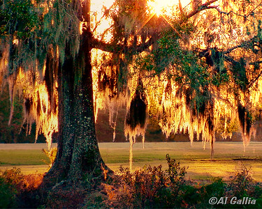 "©Al Gallia; ""Golden Afternoon""; North Park, Denham Springs, Louisiana"
