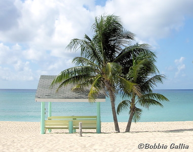 "©Bobbie Gallia; ""Is This Seat Taken?""; 7 Mile Beach on Grand Cayman Island, north of George Town."