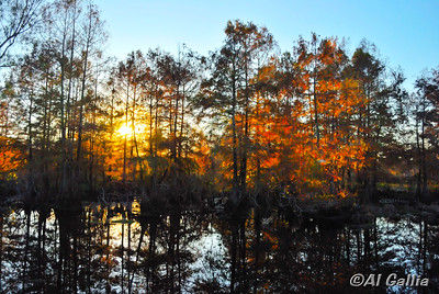 "©Al Gallia; ""Genesis - the Seventh Day""; Brilliant, peaceful autumn sunset at Lake Martin/Cypress Island Preserve near Lafayette, Louisiana."