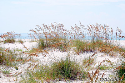 "©Al Gallia; ""Sea Oats""; Sea oats along beach at Perdido Key State Park, Florida on Hwy 292...just east Alabama line."