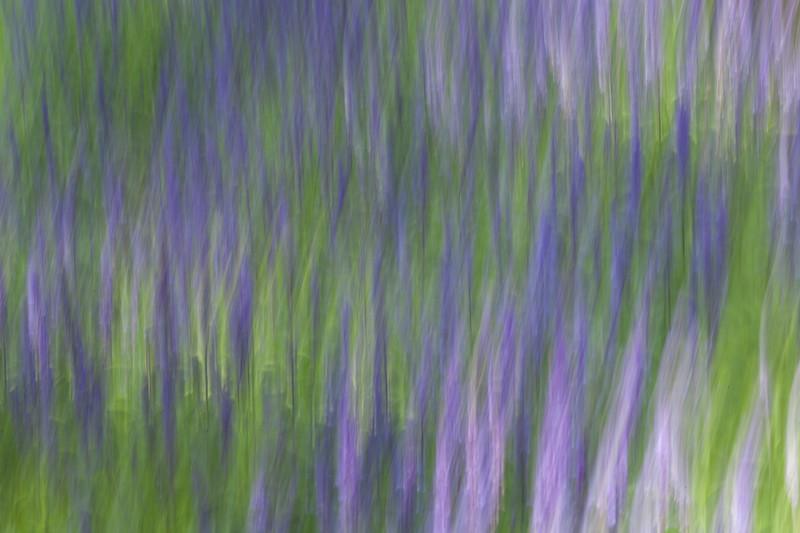 Flowing  Purple