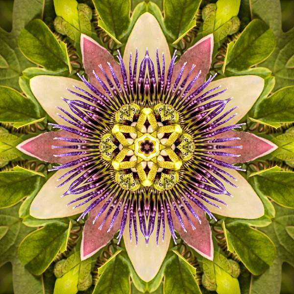Floral Reverie #3