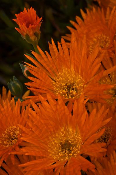 Orange Aura