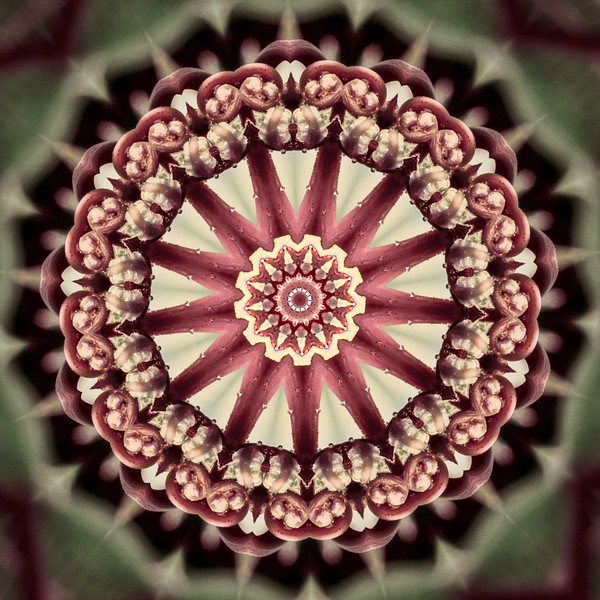 Floral Reverie #17