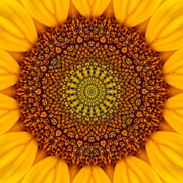 Floral Reverie #13