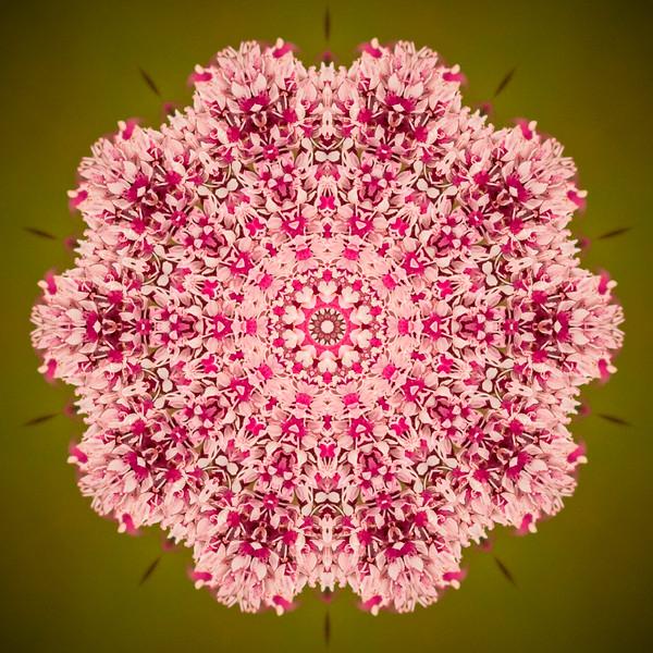 Floral Reverie #11