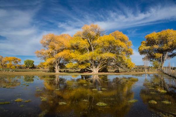 mary_whitesides-torrey_ tree_pond