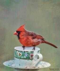 Cardinal with Texture Overlay