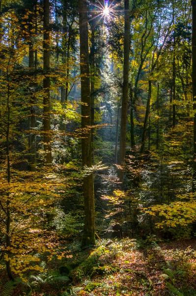 Forêt du Nideck