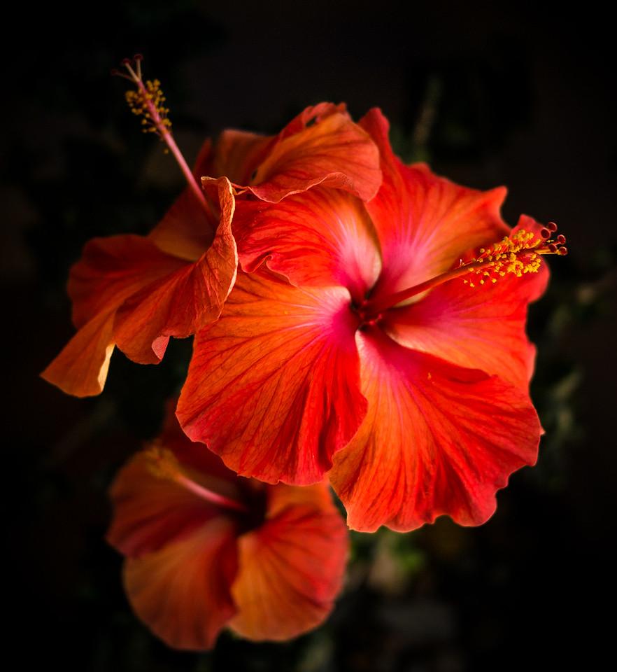 jeri_abel-Tropical_Glory