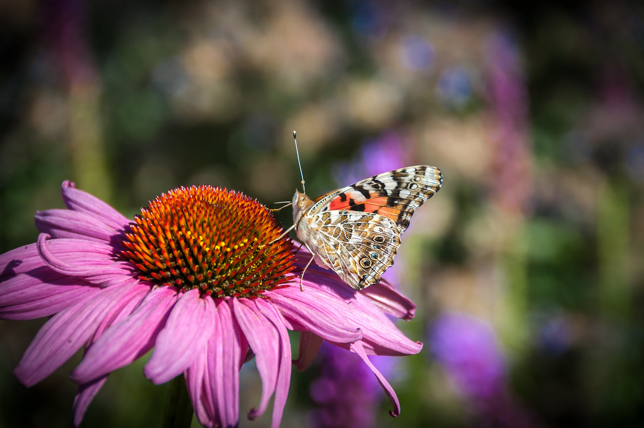 don_miller-flower_with_butterfly