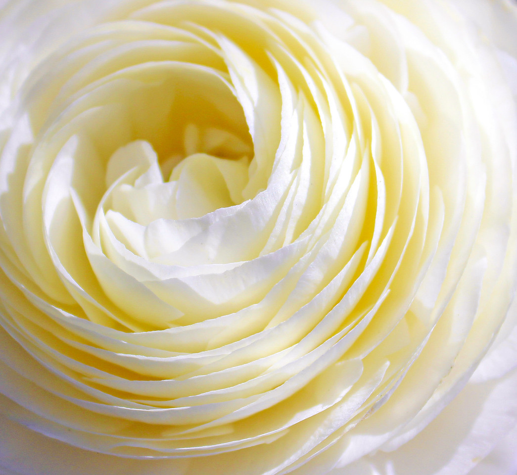 barbara_holdcroft-essence_of_cream jpg