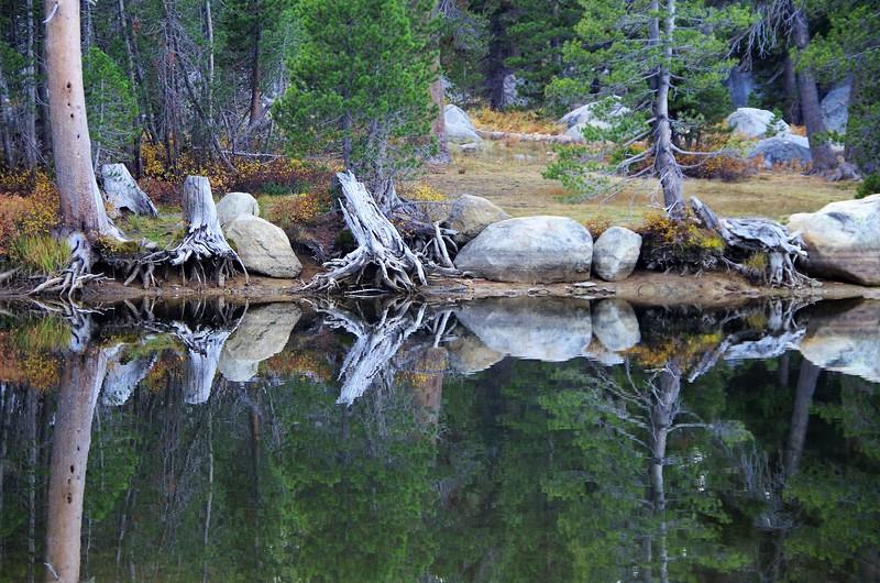 hutchinson_janine_organic_reflections