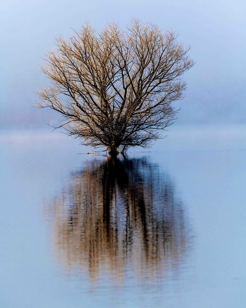 ovard_brent_tree_in_the_mist