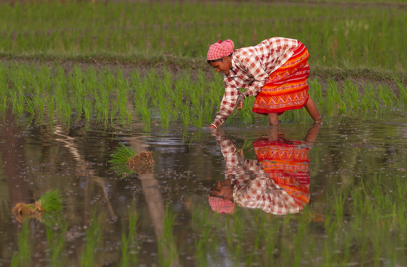 nellist_john_indian_rice_farmer
