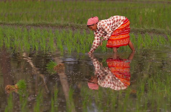 nellist_john_indian_rice_farmer
