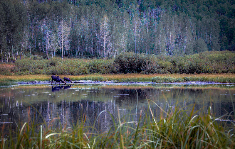 duncan_carla_family_moose_reflections