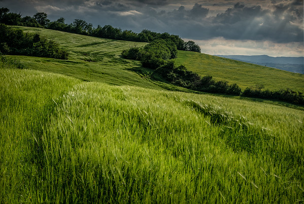 Keith-Hill_Tuscan Countryside-2111