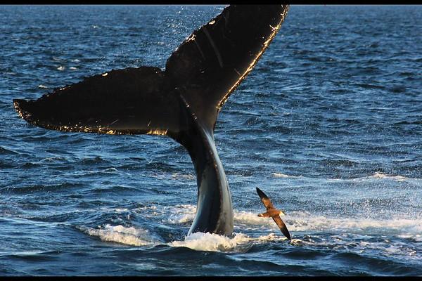 John Heath_Whale Tail And Bird