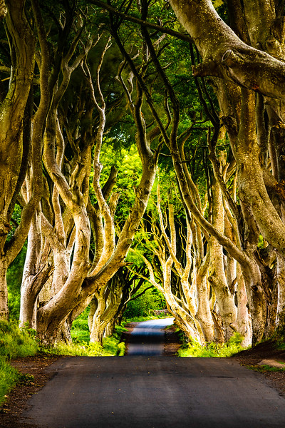 Drew_Armstrong_The_Dark_Hedges_Northern_Ireland-1