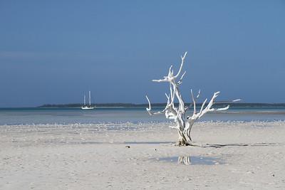Carolyn_Dvorak-Lone Tree on the Sand Flats