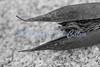 Bird Beak Seed Pod