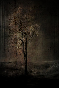 The Faraway Tree