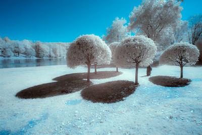 Mushroom Trees