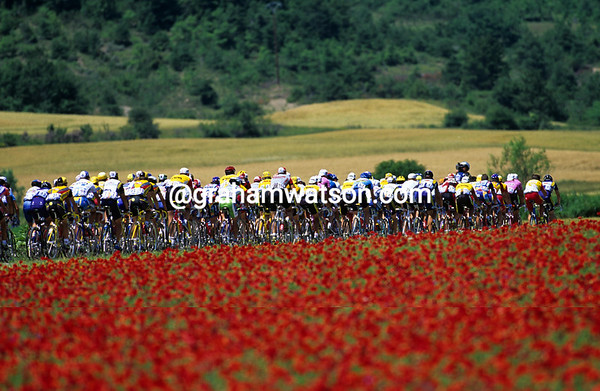 A Field of Red - The Tour peloton races past stunning flowers on a stage to Valence in 1996.<br /> <br /> TREASURED IMAGE