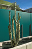 Landscaping at Mesa Contemporary Crafts