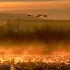 Dawn - Bosque del Apache, NM