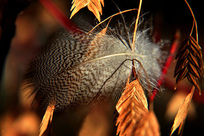 Brent Howcroft_Feather in the Wind
