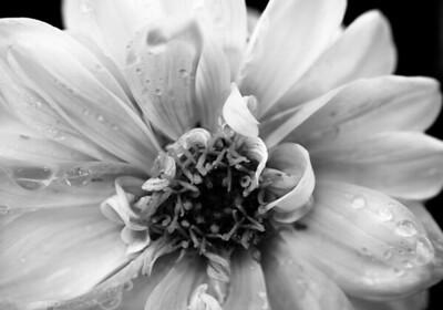 doug_powell-white_beauty