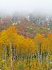 Georgia_Sevcik-Winter & Fall