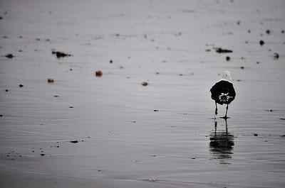 allie_porter-seagull_on_the_beach