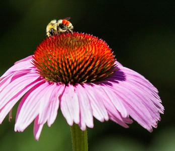 20131106-larry_hardwick-bright_bee jpg