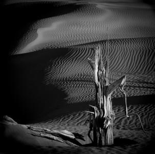 clint_phipps-tree_carcass