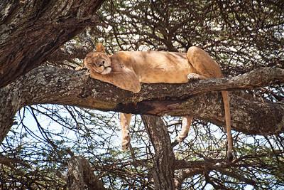 Charlotte_Brennand-Sleeping_Lion