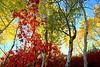 Georgia_Sevcik-Captivating Colors