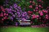 Georgia_Sevcik-Garden Bench