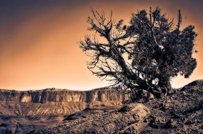 Shayne_Shaw-Desert_Sunrise