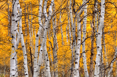 1st Place Open AR - Golden Aspens