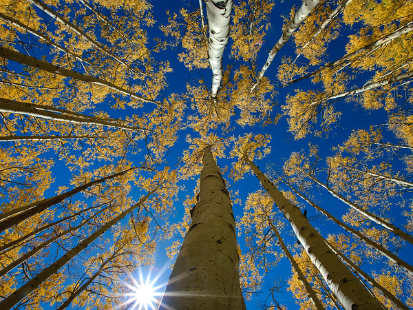 Jeff_Clay-Aspen-Canopy
