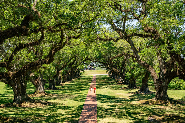 Liz_Roach-Oak_Alley