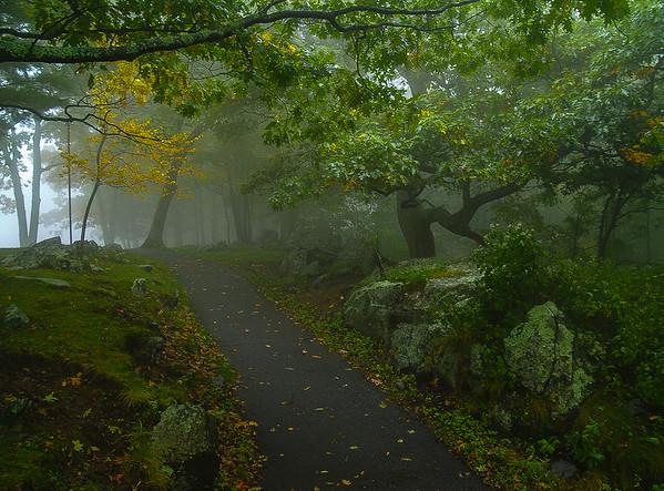 Larry_Whittaker-Spooky Pathway
